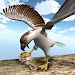 Download American Falcon Wild Sim 2016 2.2 APK