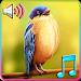 Download Birds Tweet Ringtones 1.4 APK