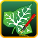 Download Ivy Draw: Vector Drawing 1.32 APK