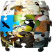 Download Ornithopedia Europe 1.3.4 APK