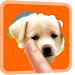 Download Scratch And Guess Animals 2018 0.1 APK