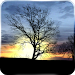 Download Silhouette Free Live Wallpaper 2.1 APK