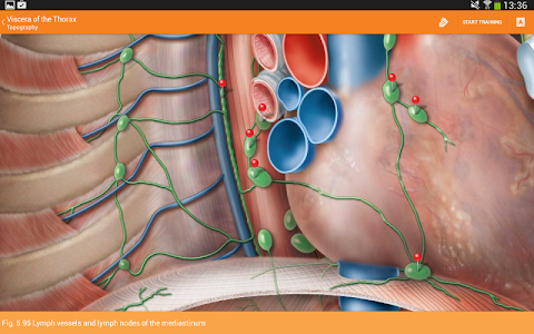 Download Sobotta Anatomy 210 Apk Downloadapk