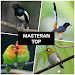 Download Suara Burung Kicau 1.0 APK