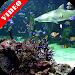 Download Video Wallpaper: Aquarium 2.0 APK