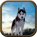 Download Wild Wolf Simulator 1.2 APK